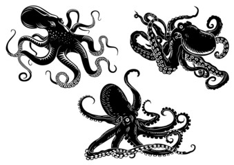 Black danger cartoon octopus characters