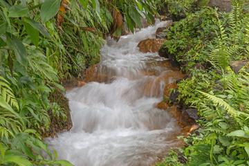 Wilder Bachlauf im Regenwald