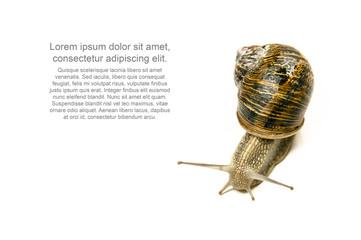 salyangoz, sümüklü böcek