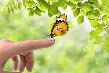 Schmetterling 164