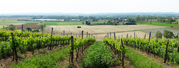 vignoble du Tarn , Rabastens