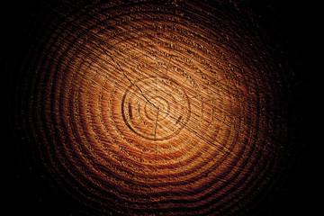 Baumstamm mit Jahrsringen