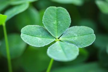 四つ葉のクローバー - four leaf clover
