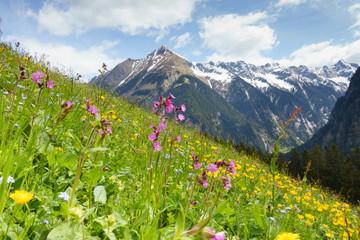 Frühling mit Bergblumenwiese