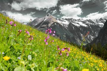 Bergblumenwiese mit Berg in schwarz weiß im Hintergrund