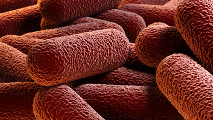 Crowd of rod-shaped bacteria