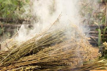 dry medicinal herb lit, white smoke