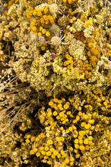 dried herbs, tansy, yarrow, wormwood, poppy, ear