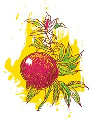 hand drawn illustration of pomegranate