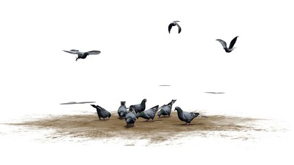Pigeons group - isolated on white background