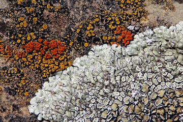licheni; forma e colore