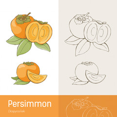 Persimmon tasty fruit and leaves botanical drawing
