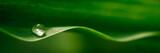 Fototapety Water Droplet