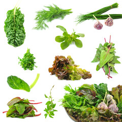 Collection of fresh herbs necessary on the each kitchen