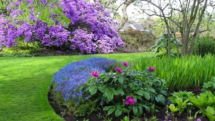 Beautiful lilac rhododendron blossoms in Spring time, Europe