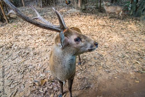 Foto op Plexiglas Cyprus Deer in the zoo.