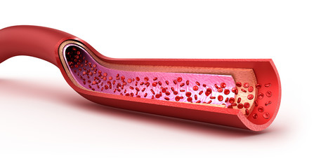 Blood vessel sliced macro with erythrocytes. Isolated on white