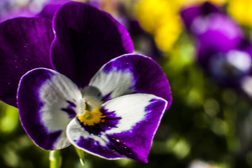 Fiore macro fiori