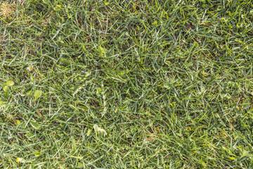 Textured gren grass in spring