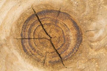 Nodo su un asse di legno