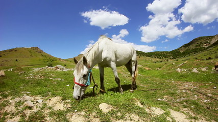 White horse grazing in the mountain valley