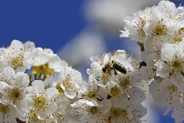 Macro flowers and bee