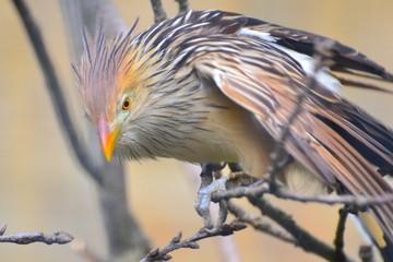 ernster Vogel auf der Jagd