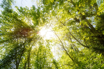 Wald Sonne Lichtstrahlen