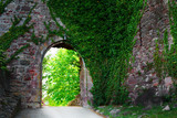Ivy covered wall on a narrow medieval street - 83205067