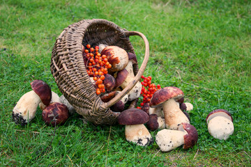 Harvest of mushrooms in basket