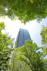 新緑と高層ビル