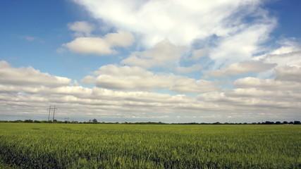 Farm Field Green Plants Wave Wind Clouds Passing