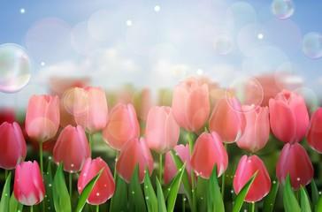 Pink tulips flowers in the garden. vector