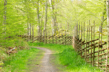 Traditional wooden fence