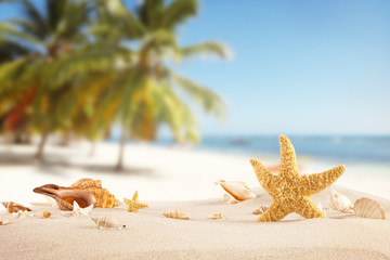 Sandy beach with seashells