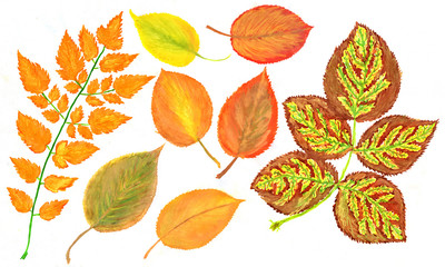 Watercolor foliage, autumn leaves