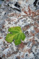 Blatt auf einem Stein