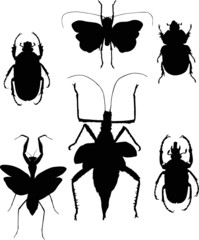 six black insects collection isolated on white