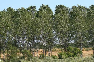 valli di campotto parco regionale delta del po
