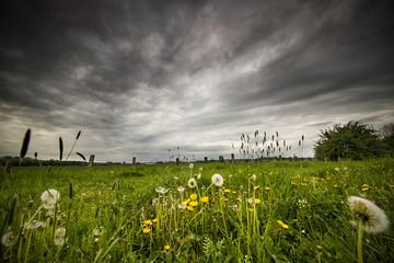 Sommerwiese vor dem Sturm