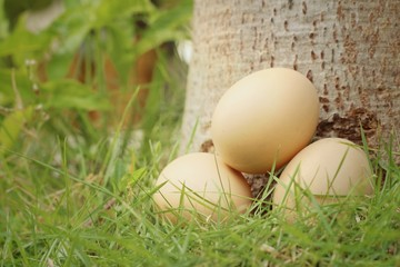 Eggs on a background of green grass at the park.
