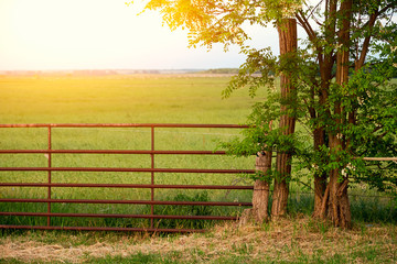 Wooden fence on pasture