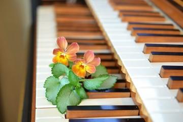 チェンバロの鍵盤とパンジー