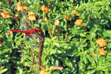 Dragonfly Flower Island