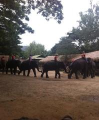Elephants show