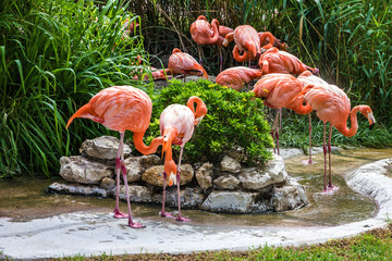 flamingo family in Lisbon zoo, Portugal