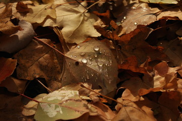 Late autumn leaves