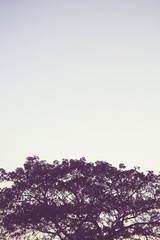 nature of vintage tree with the  sky, Vertical background