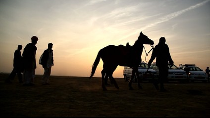 Silhouette of Horse in the desert