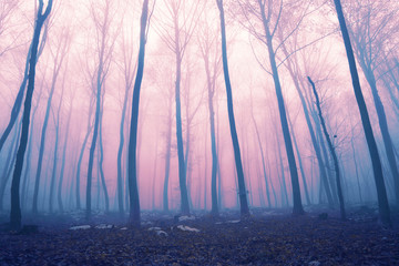 Fantasy color foggy fairytale forest © robsonphoto